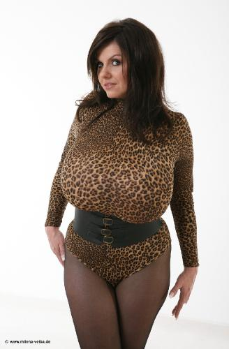 Leopard Body (2008 feb)