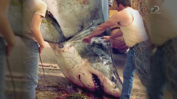 ������ ����. ����� �� ������� / Lair of the Mega Shark (2015)