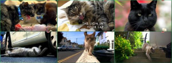 ��� � ��� �� ������� / The Lion in Your Lap (2014)