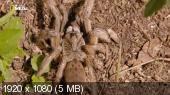 NG.Удивительные пауки / NG.Incredible spiders (2015) HDTV 1080i от KinoHitHD