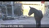Старик и горы (2008) IPTVRip от Pshichko66